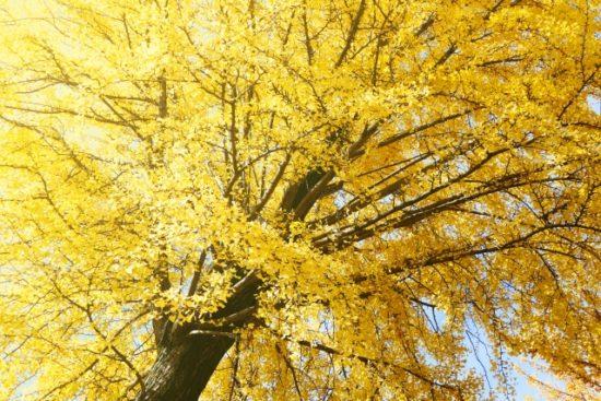 街路樹の画像
