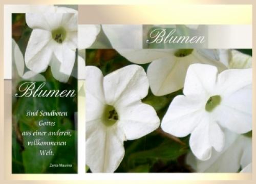 Trauerblumen und ihre Bedeutung