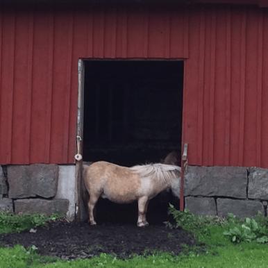 Isa och Minigänget av Lotta Hylander