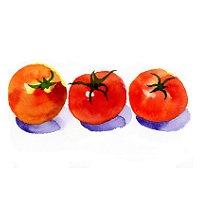 allergy-tomato