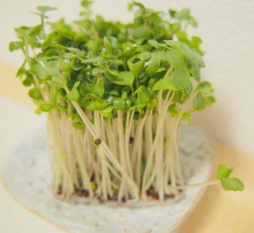 broccoli-sprout