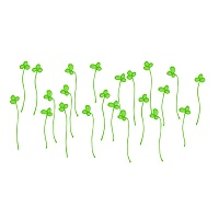 image-broccoli-sprout