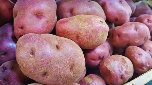 154.potato5