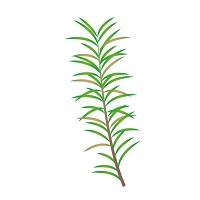 182.tea-tree