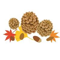184.pine-nut
