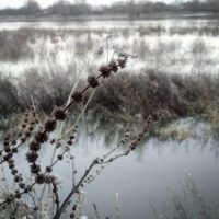 [DOSSIER N°221] Une galerie de mes photos hivernales
