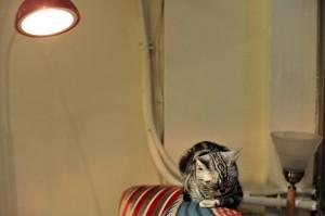 猫ちゃん キャットタワー