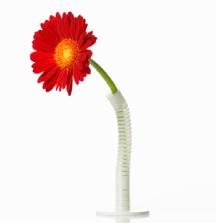 おうちカフェインテリアに一輪挿しでお花を飾ろう クネクネ曲がる一輪挿し