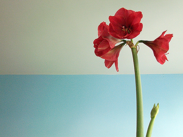 観葉植物をインテリアに 参考になる画像