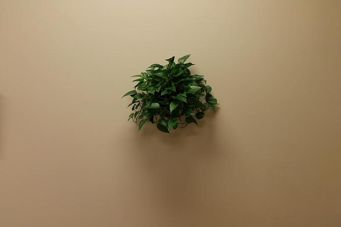 壁をおしゃれに観葉植物を飾って有効活用!壁掛けプランター・鉢・ガーデニングポットの使い方009