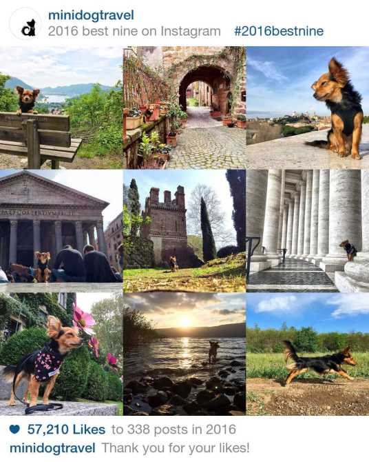 minidogtravel best nine