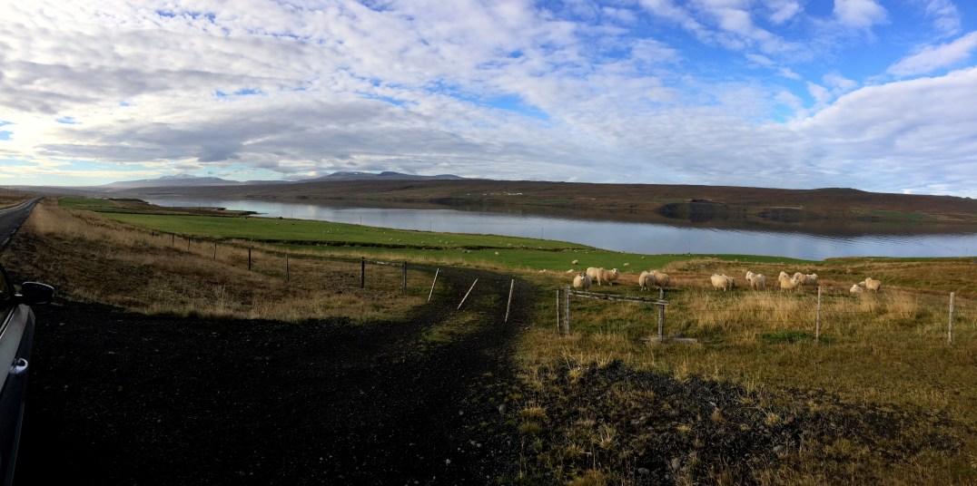 """Foto Lago del """"Mývatn"""" Islanda di Elena Fornai"""