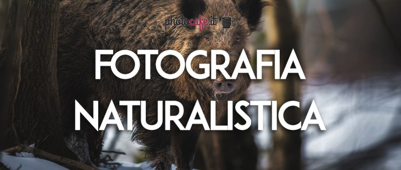 Introduzione alla fotografia naturalistica