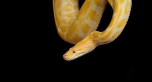 significado de sueño con serpiente amarilla
