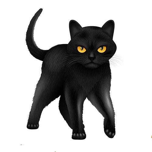 soñar con gato negro