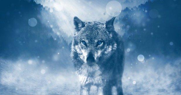 Soñar que nos persiguen lobos