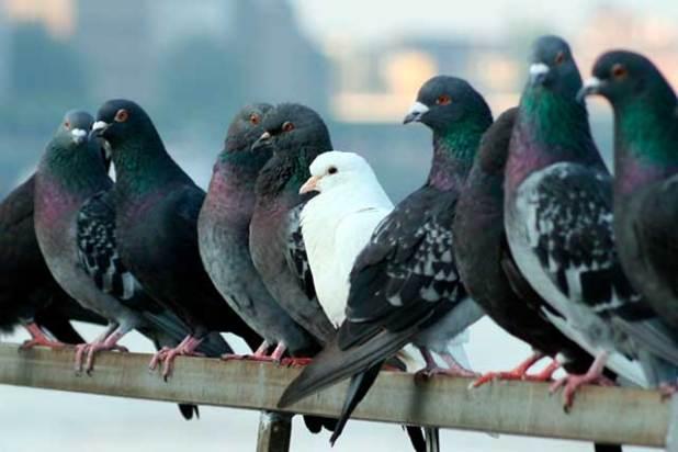 Soñar con una bandada de palomas