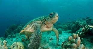 Soñar con tortugas