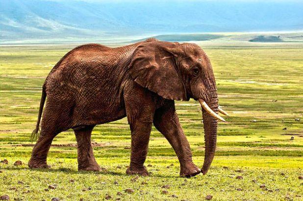 Soñar con un elefante