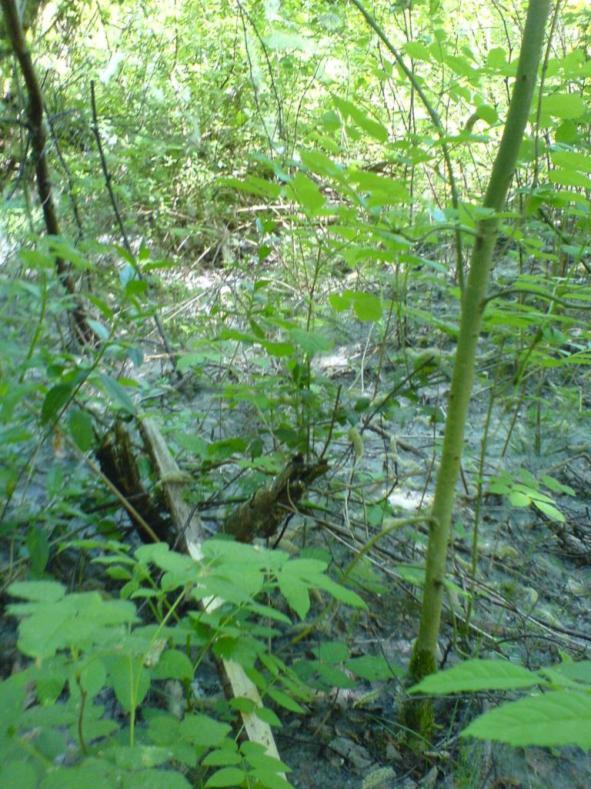 pic fr - spinnenweben im wald