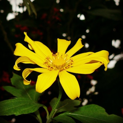 Florida flower power