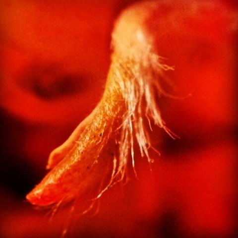 Hairy flower world