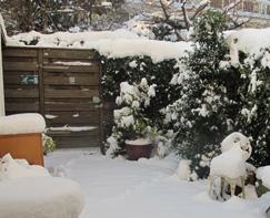 winter-garden