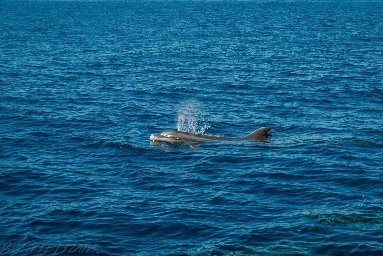 delfín mular en Tenerife