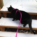 """Bella is slightly suspicious of this whole """"snow"""" thing."""