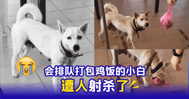xplodeliao_小白_打包鸡饭_网红狗狗_遭射杀_流浪狗