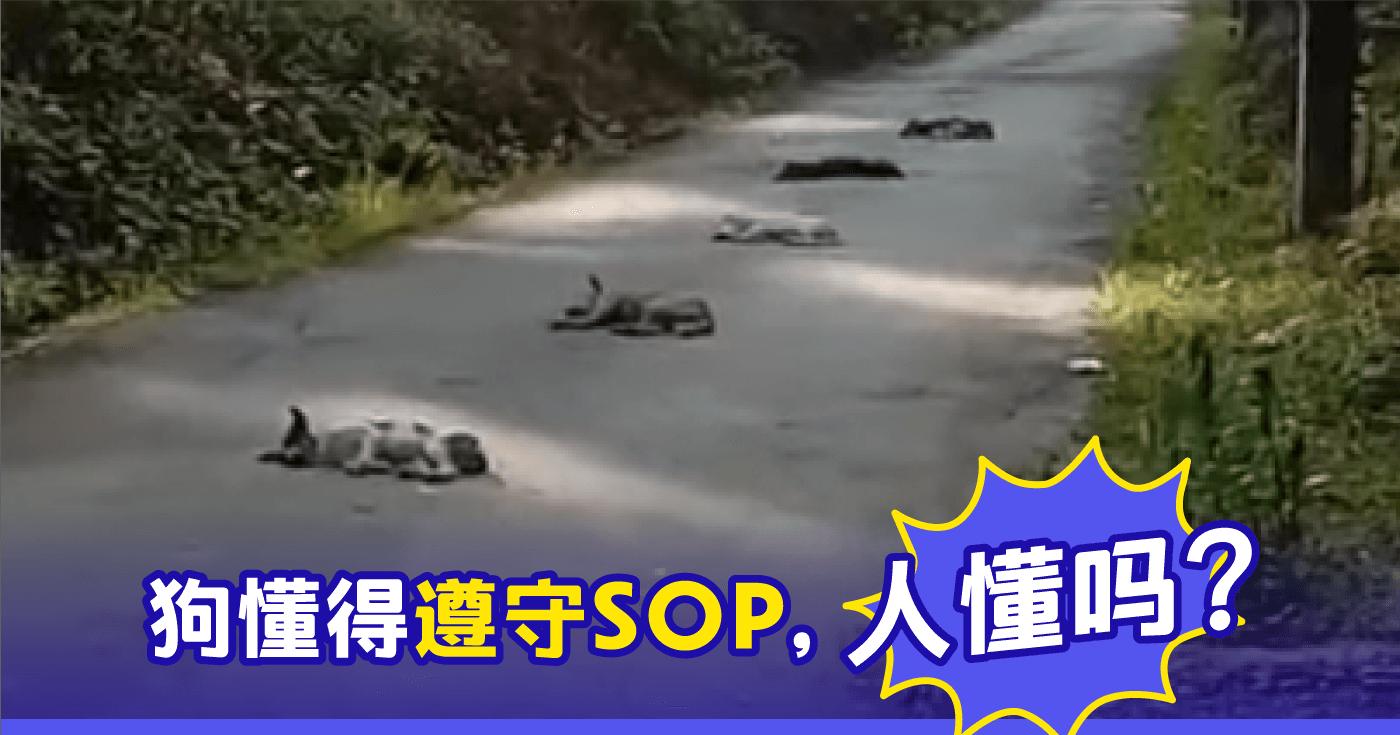 XplodeLIAO_狗狗睡马路中央
