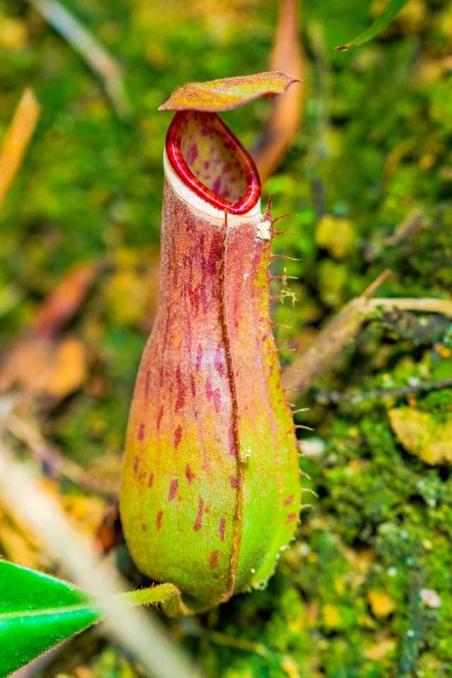 XplodeLIAO_升旗山生物圈保护区植物