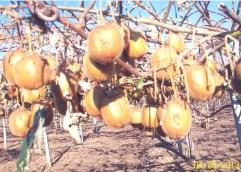Σε απόγνωση οι αγρότες του Νέστο – Στα 0,42 €/κιλό η εκτίμηση των ελεγκτών του ΕΛΓΑ στα 0,45€ – 0,53€ κινείται η αγορά