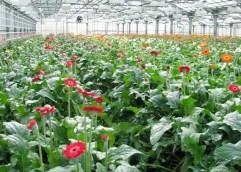Η αξιοποίηση της γεωθερμικής ενέργειας στον αγροτικό τομέα