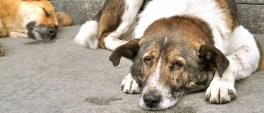 Η Διοίκηση του Δήμου, καταδικάζει κάθε πράξη κακοποίησης και βάναυσης συμπεριφοράς εις βάρος της ζωής των ανυπεράσπιστων ζώων