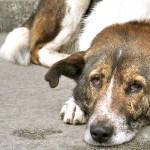 Κομοτηνή: Συνελήφθη 78χρονος κατηγορούμενος πως σκότωσε με ξύλινο αντικείμενο έναν σκύλο