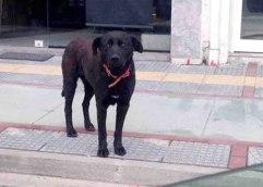 ΣΤΟ ΤΡΙΜΕΛΕΣ ΠΛΗΜΜΕΛΕΙΟΔΙΚΕΙΟ ΚΑΒΑΛΑΣ: Αύριο θα γίνει η δίκη Βερβερίδη για κακοποίηση σκύλου