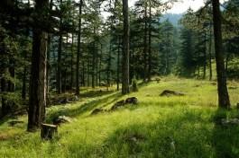 Επιτρέπεται η πρόσβαση στα δάση της Καβάλας και της Θάσου
