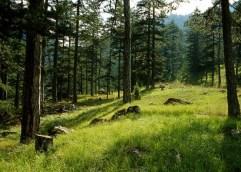 Δράμα: Το παρθένο δάσος στο Παρανέστι έτοιμο να προσφέρει και φέτος δυνατές συγκινήσεις σε δεκάδες αθλητές – δρομείς του υπερμαραθωνίου