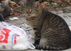 Τουλάχιστον ταΐζουμε τις γάτες