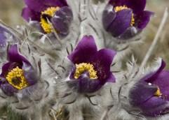 ΕΡΕΥΝΑ ΑΠΟ ΤΟ ΤΕΙ ΑΜΘ ΠΑΡΑΡΤΗΜΑ ΔΡΑΜΑΣ: Στολίστε τα παρτέρια με αυτοφυή καλλωπιστικά φυτά!
