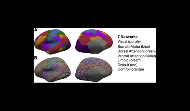 Πώς αποκαθίσταται η λειτουργία του ανθρώπινου εγκεφάλου. μετά τη αφαίρεση του ενός από τα δύο ημισφαίρια;