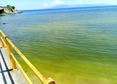 Γιατί πρασίνισαν οι ακτές της πόλης της Καβάλας