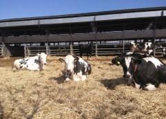 Στην ΑΜΘ: Ευκαιρίες για αγρότες και κτηνοτρόφους από το «πρασίνισμα» των δικτύων του φυσικού αερίου