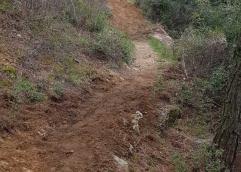 Εθελοντές καθάρισαν το περιαστικό δάσος