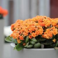 Δες 10 Φυτά που απαιτούν ελάχιστο πότισμα!