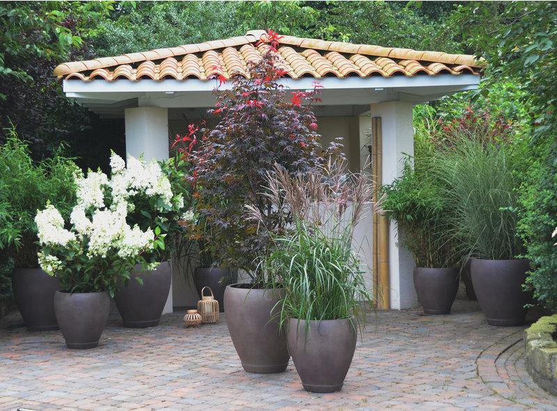 Garten Pflanzen Sichtschutz