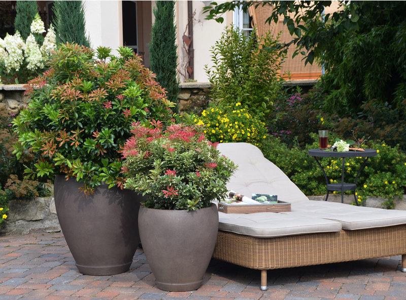 Garten und Terrasse  XXL Pflanzen
