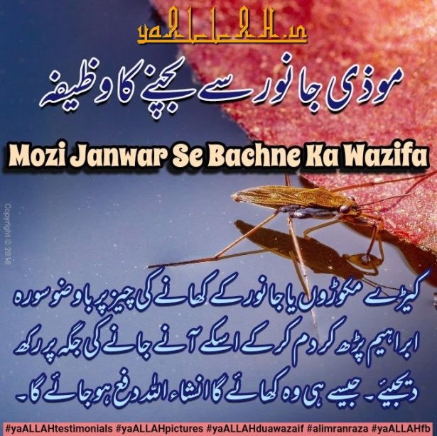 Best Pest Control) Dua to Keep Pests Away-Keeron se Nijat