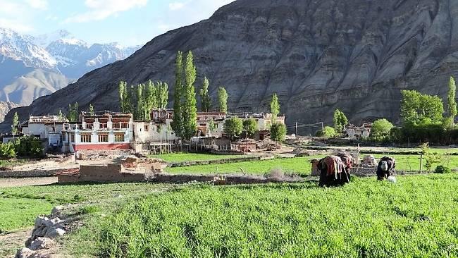 Ladakh petit village de montagnes et champs cultivée devant